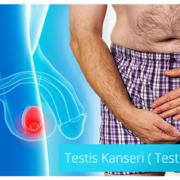 Testis Kanseri ( Testis Tümörü)